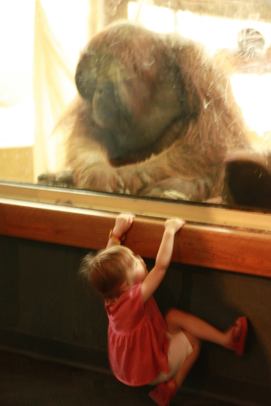Which monkey was watching which?