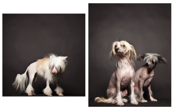 paul-nathan-studio-groomed-4-600x375.png