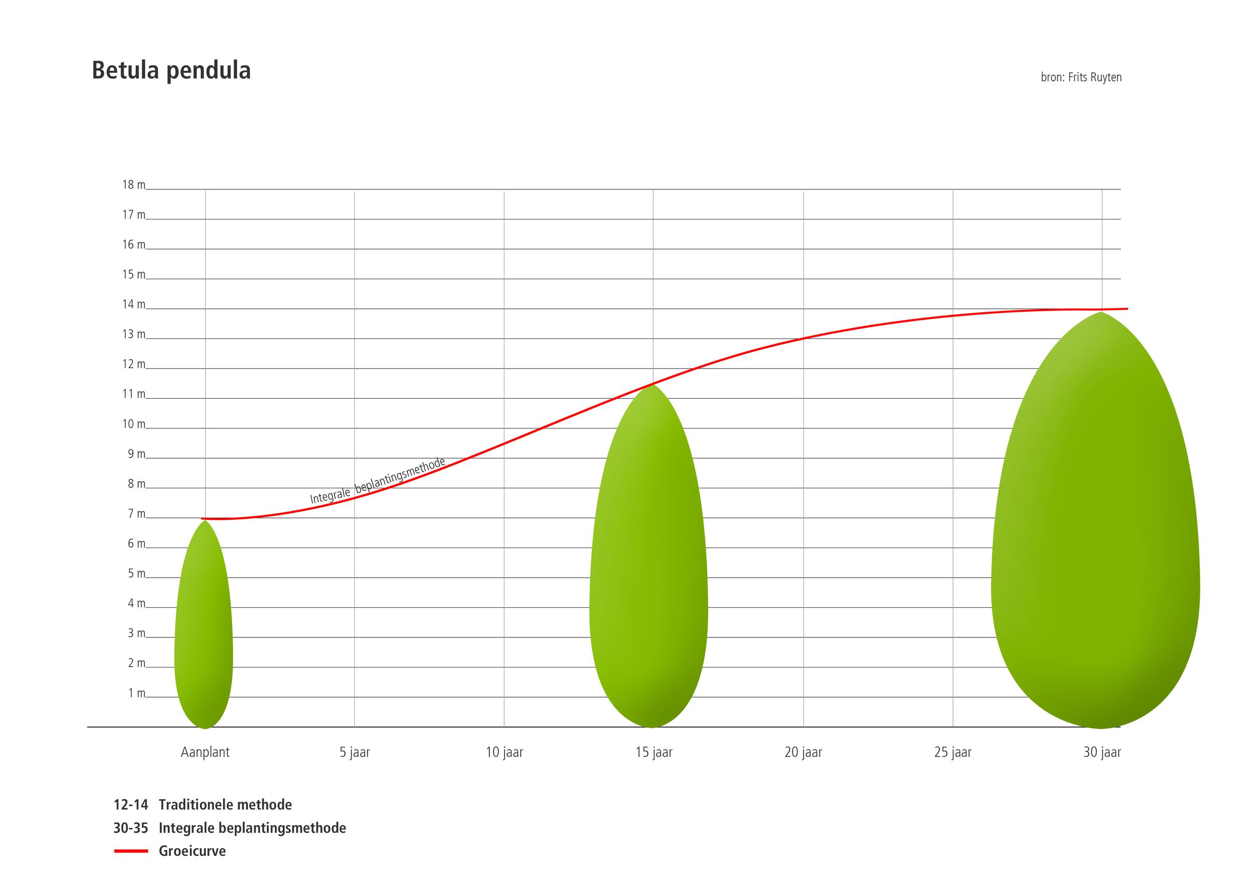 Groeicurve Betula pendula