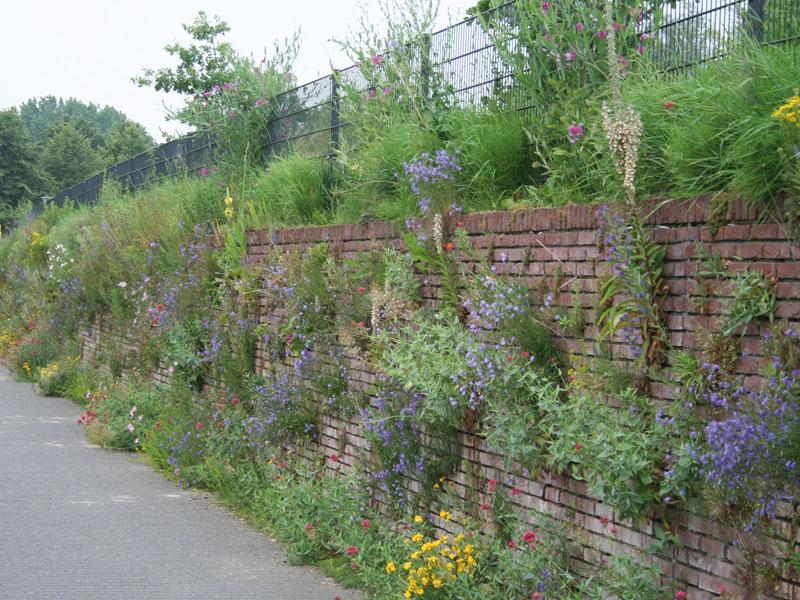 Begroeide muur in Utrecht