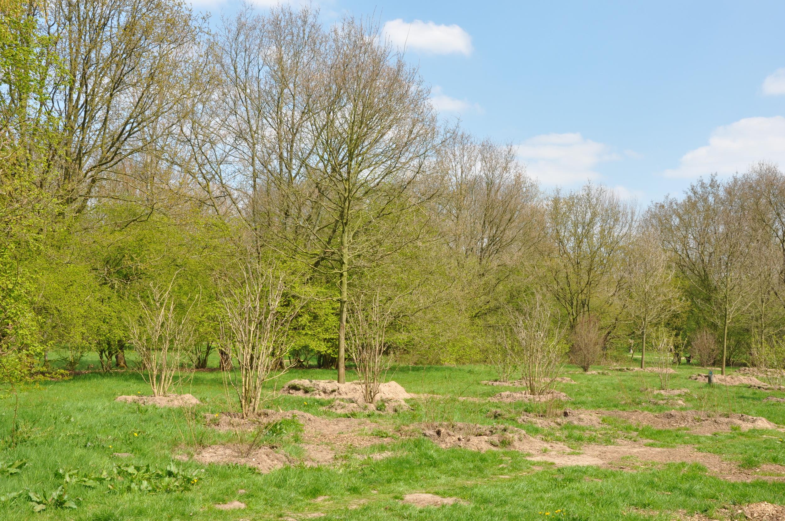 Aanplant volgens IBR - voorjaar 2013 bomen + 6 m hoog en heesters + 2 m hoog