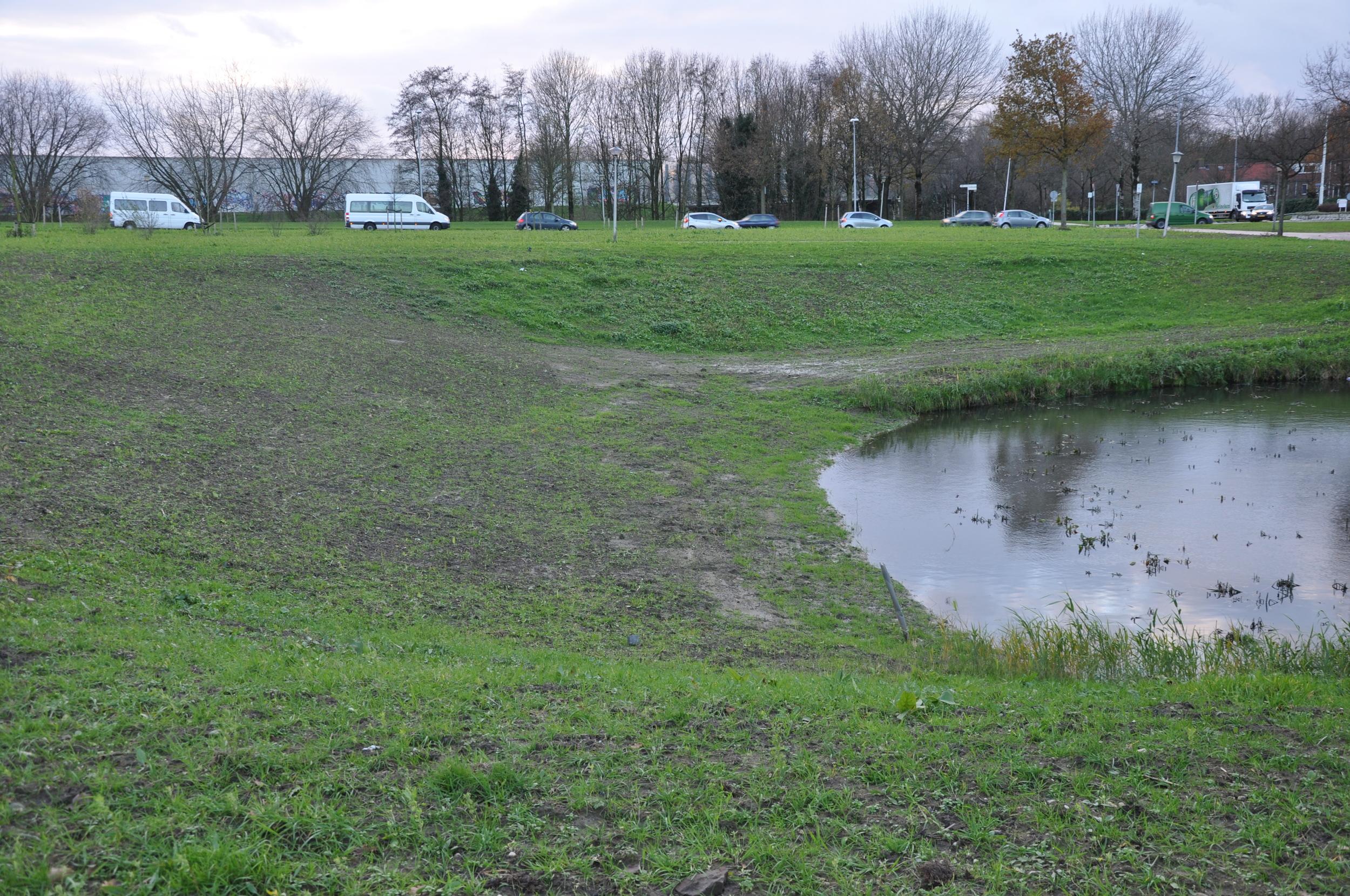Aangepast talud bij de voormalige waterbuffer waarbij een groot deel vanhet riet met wortel en al is verwijderd, najaar 2014