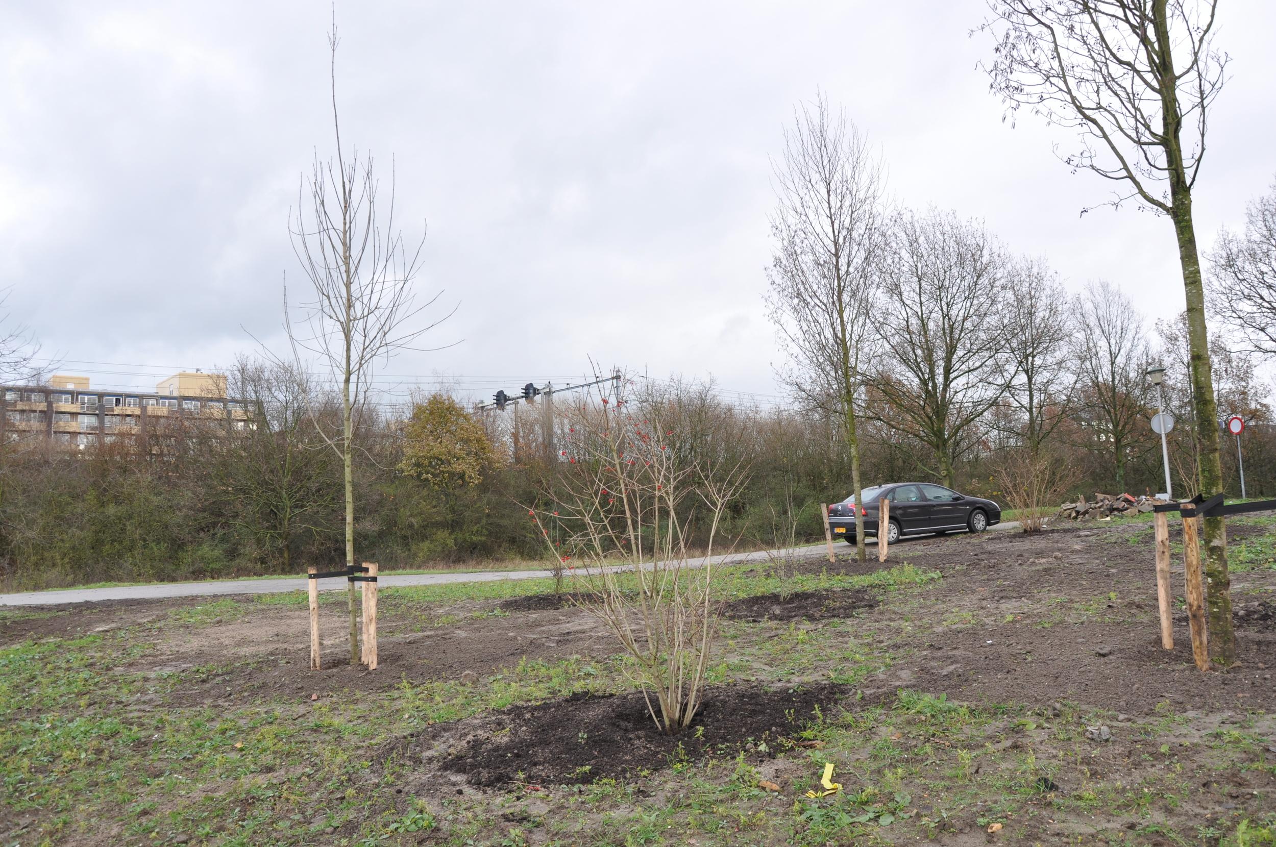 Aanplant bomen en heesters in december 2014
