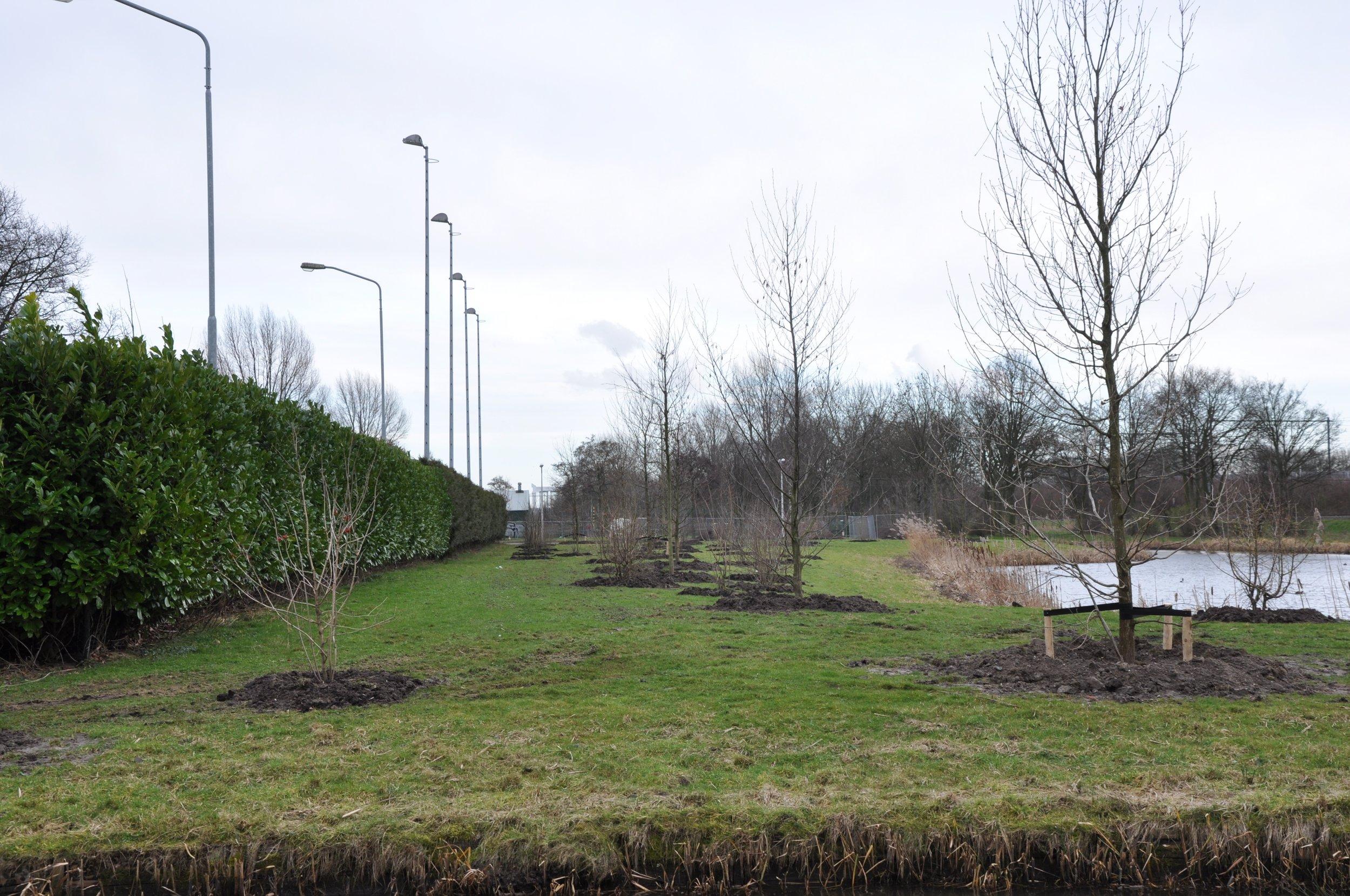 Nieuwe aanplant - voorjaar 2014: bomen: + 6 m hoog