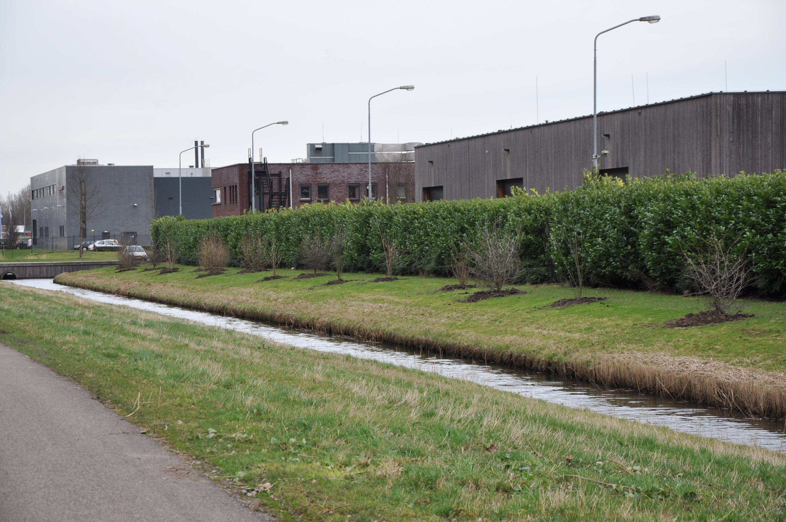 Nieuwe aanplant - voorjaar 2014:   heesters: + 1 ,75 m hoog