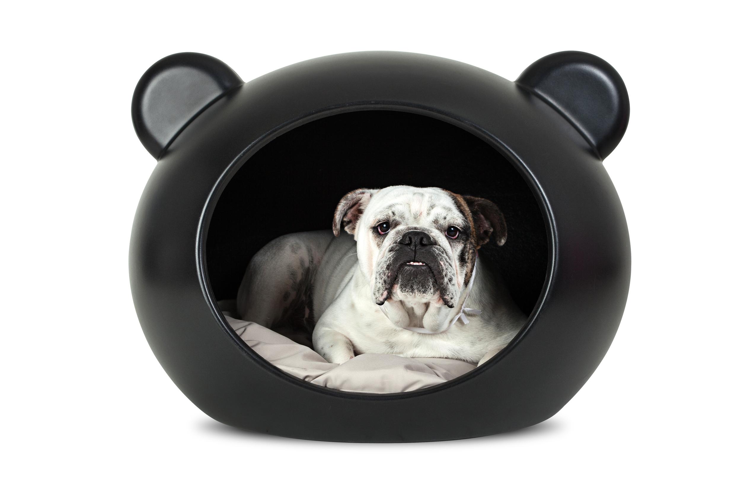GuisaPet-Bulldog.jpg