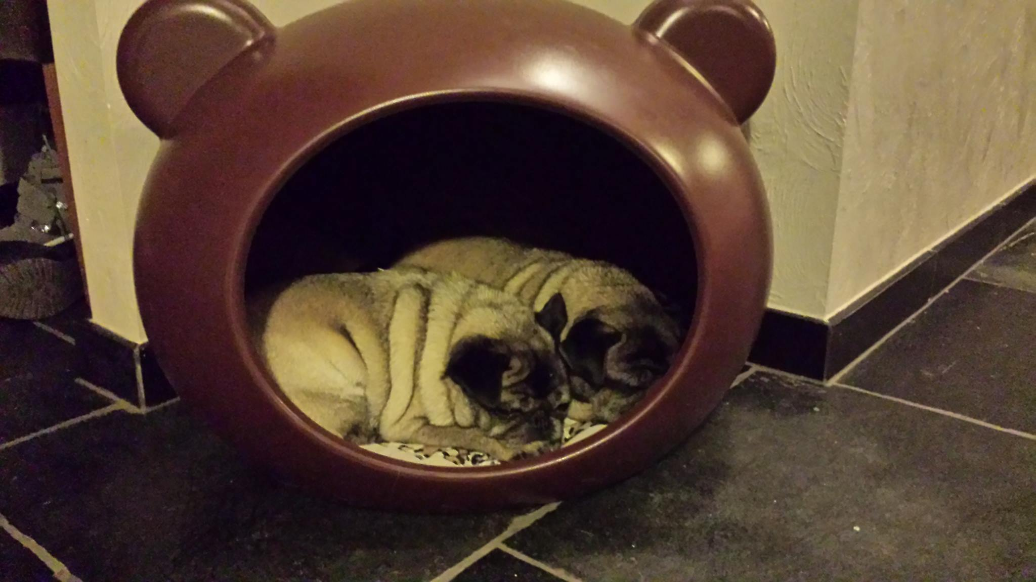 dog_beds_belgium.jpg