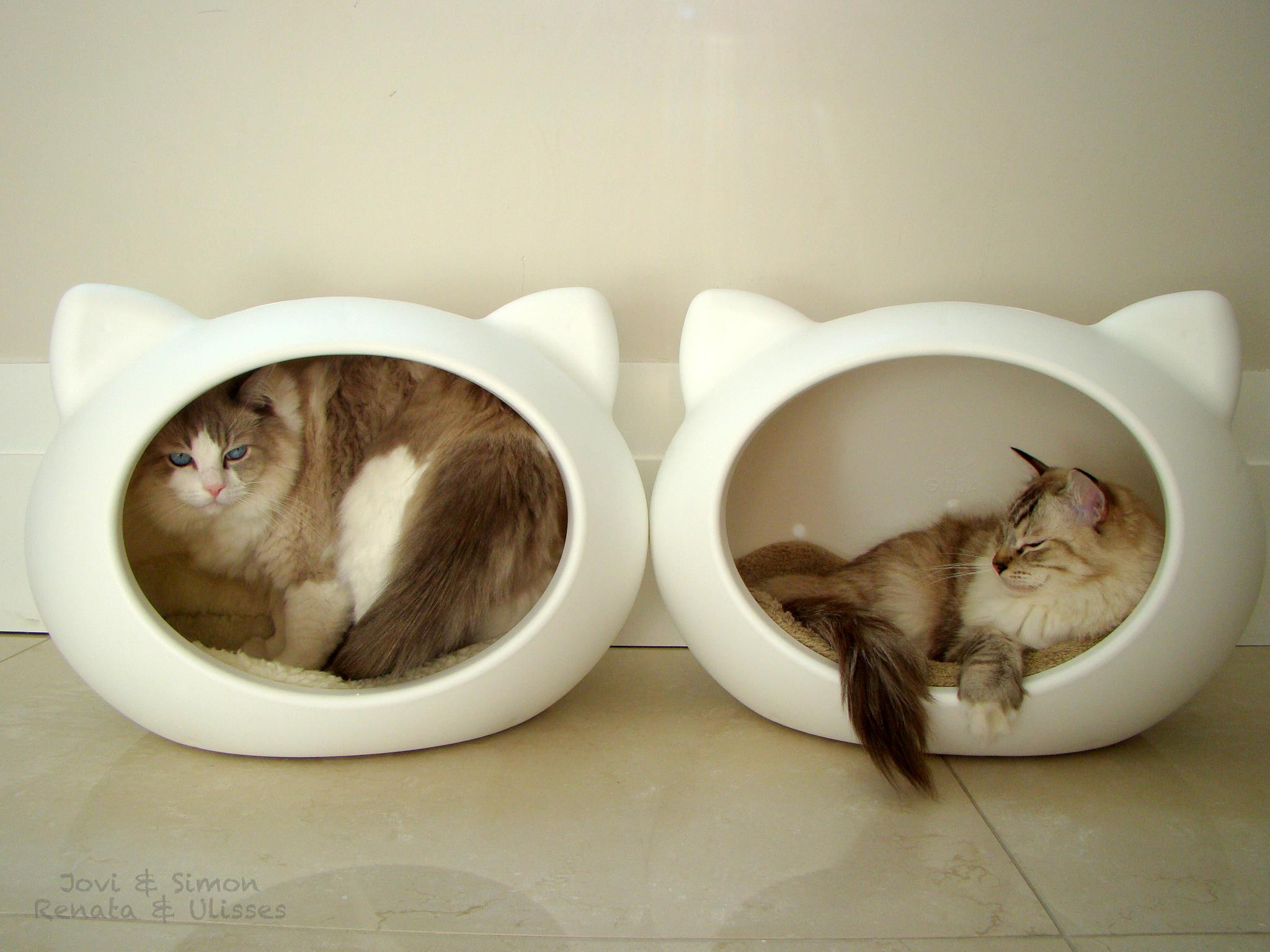 cats_beds_uk_guisapet_home_acessories.jpg