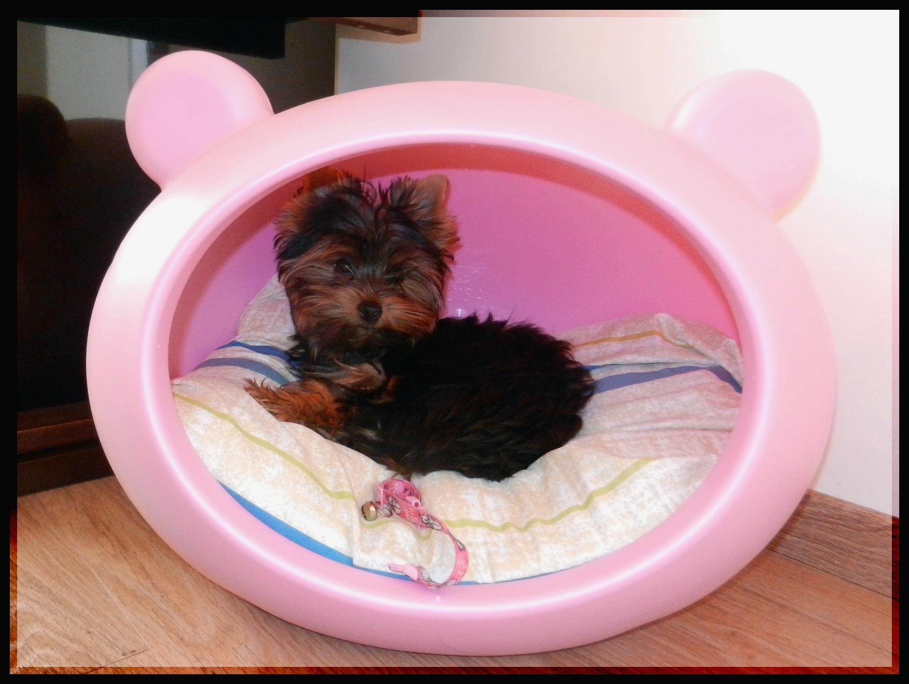 pink_cute_small_dog_bed_guisapet_uk.jpg