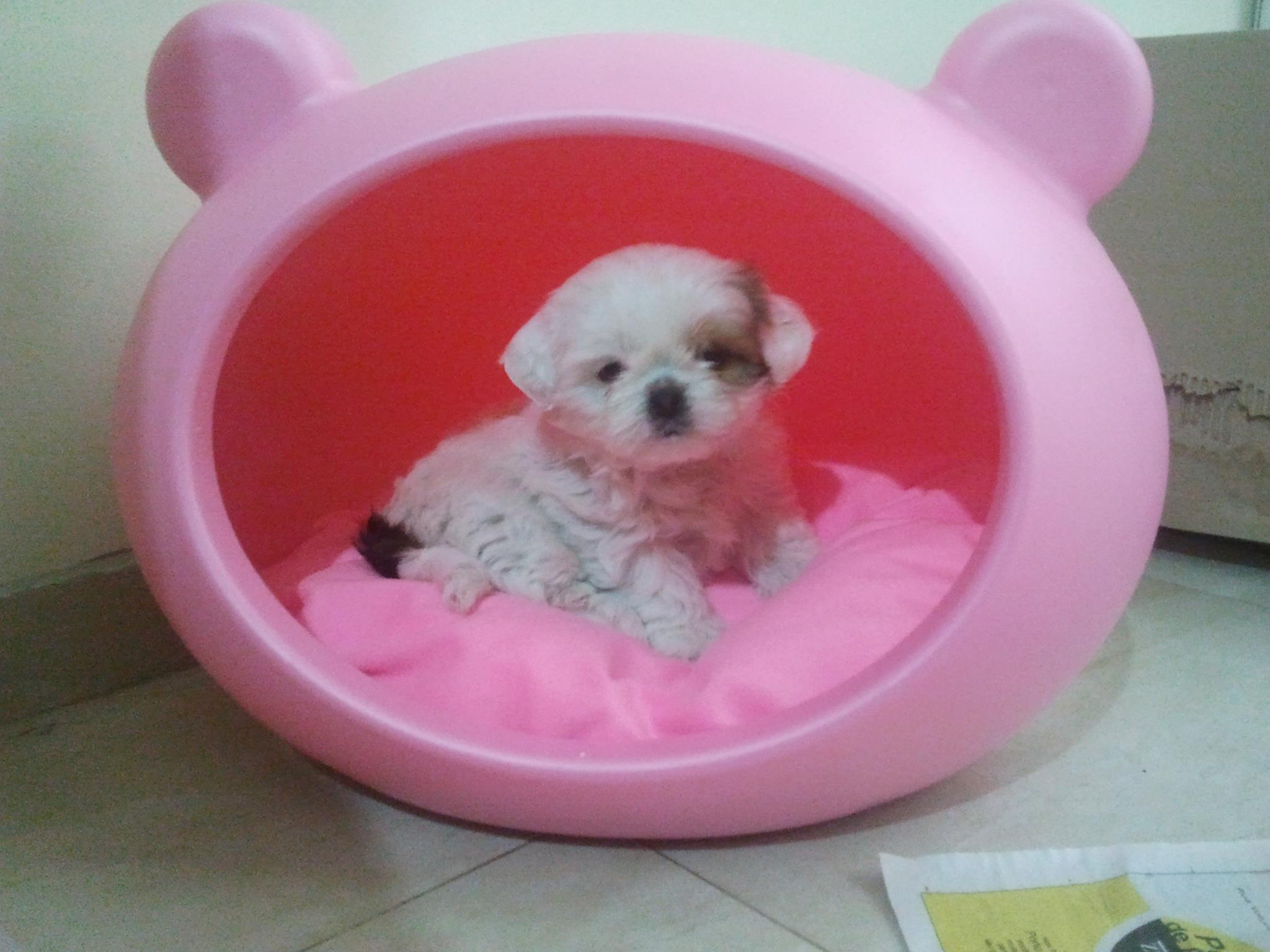 quality_pink_small_dog_bed_uk_guisapet.jpg