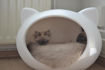 cat_beds_dutch_holland.jpg