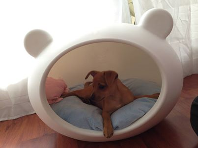 tiny_dog_bed_guisapet.jpg