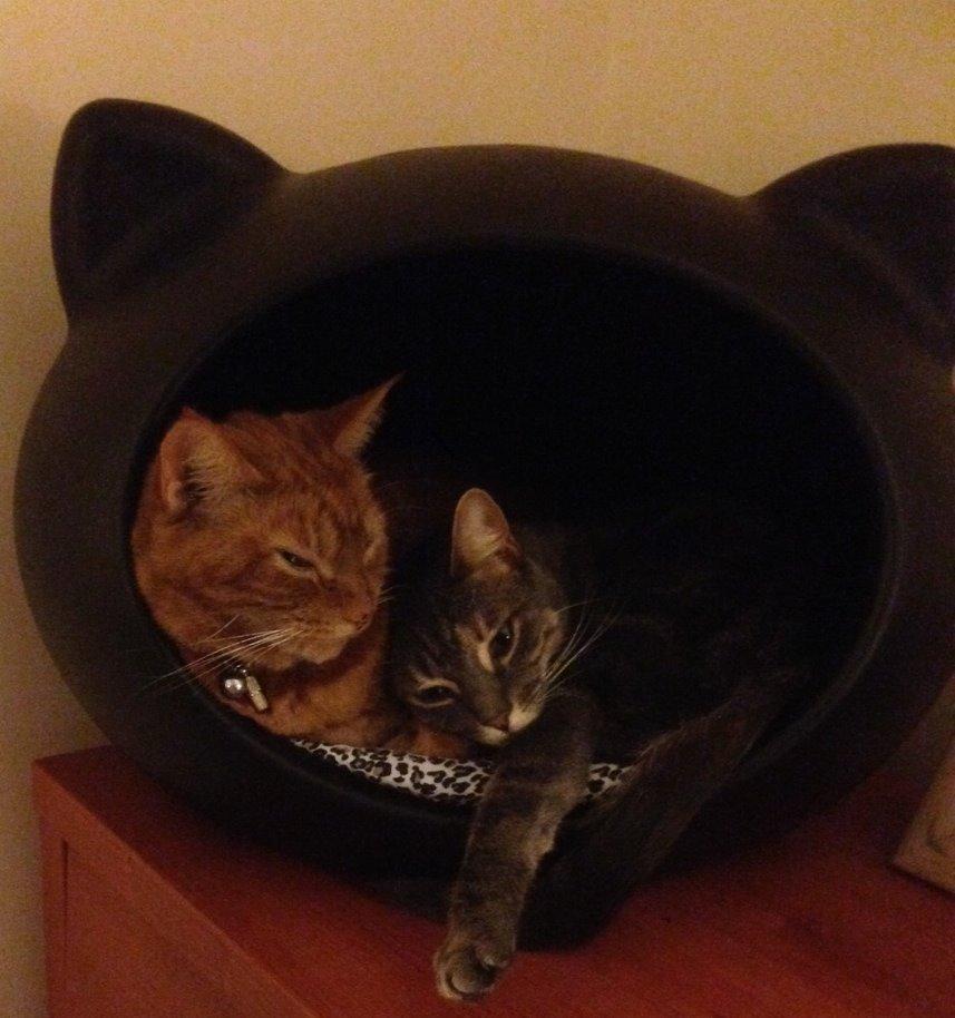 cave_cats_uk.jpg