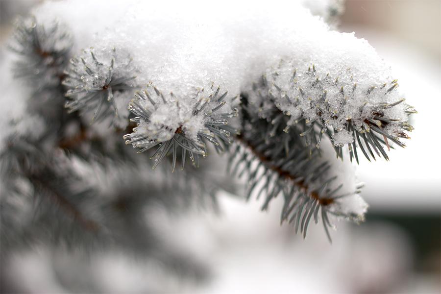 Snow-day_0040-as-Smart-Object-1.jpg