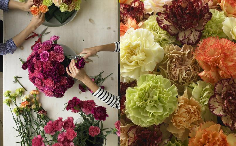 3_carnations.jpg