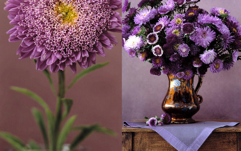 3_purplemum.jpg