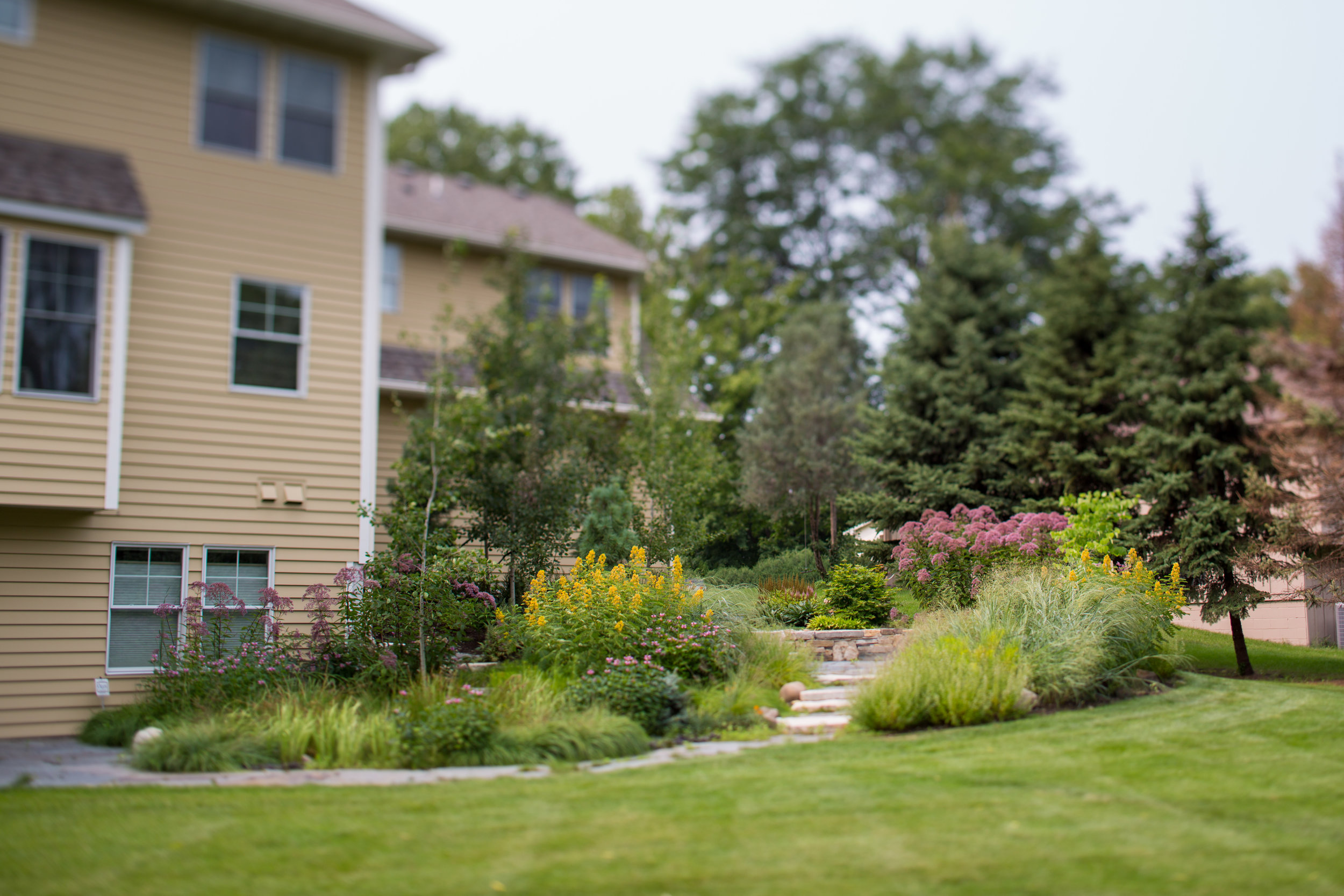After: The house is now strongly anchored to its surroundings with tall trees and perennials.