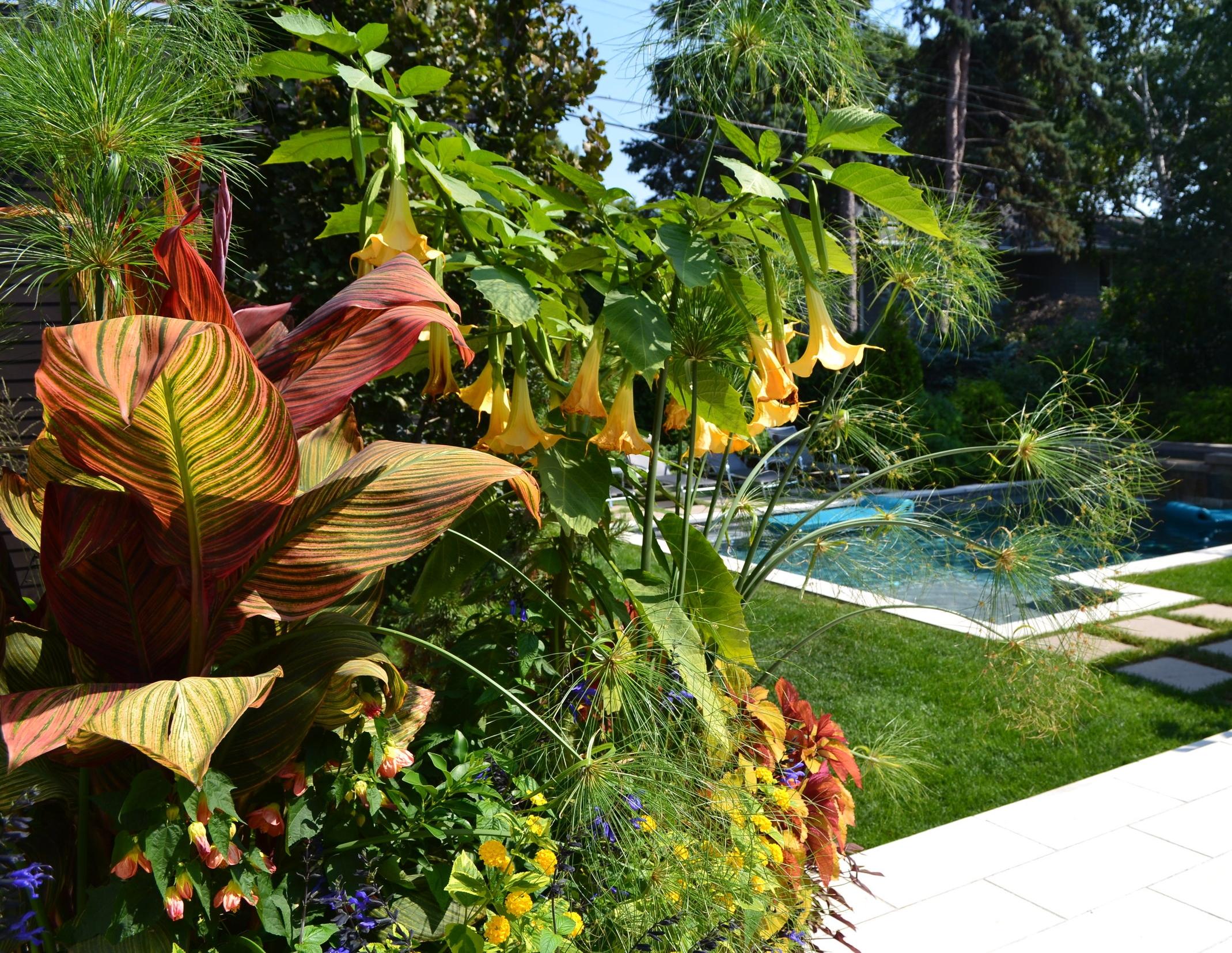 These tropical annuals love full sun -- canna lilies, brugmansia, lantana, etc.