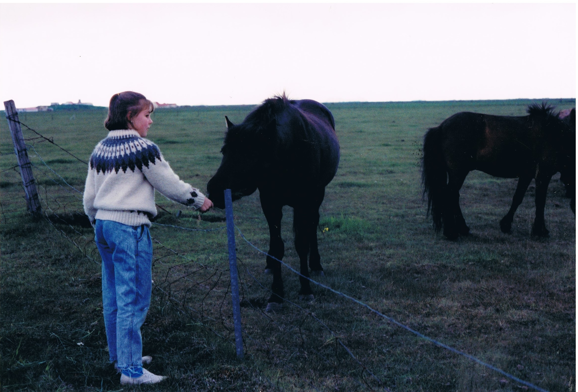 Hanging with the Icelandic horses.