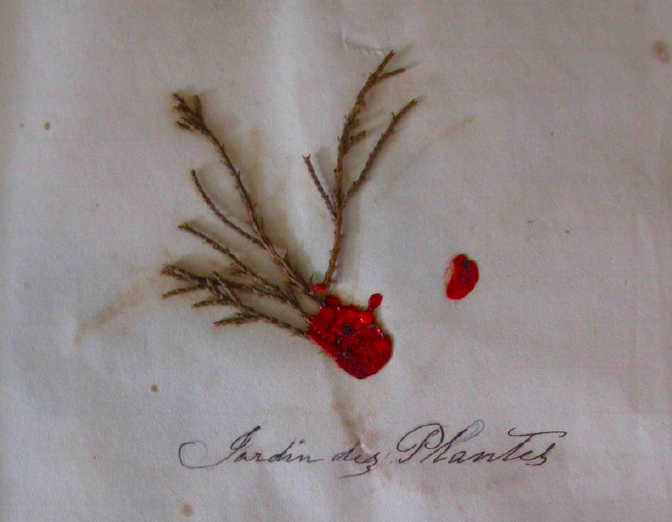 "Octavia's plant specimen from her ""Book of Relics,"" 1844"