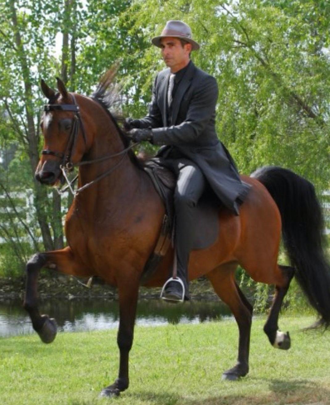 ROL Diamond Afire   Todd Hickerson as the rider