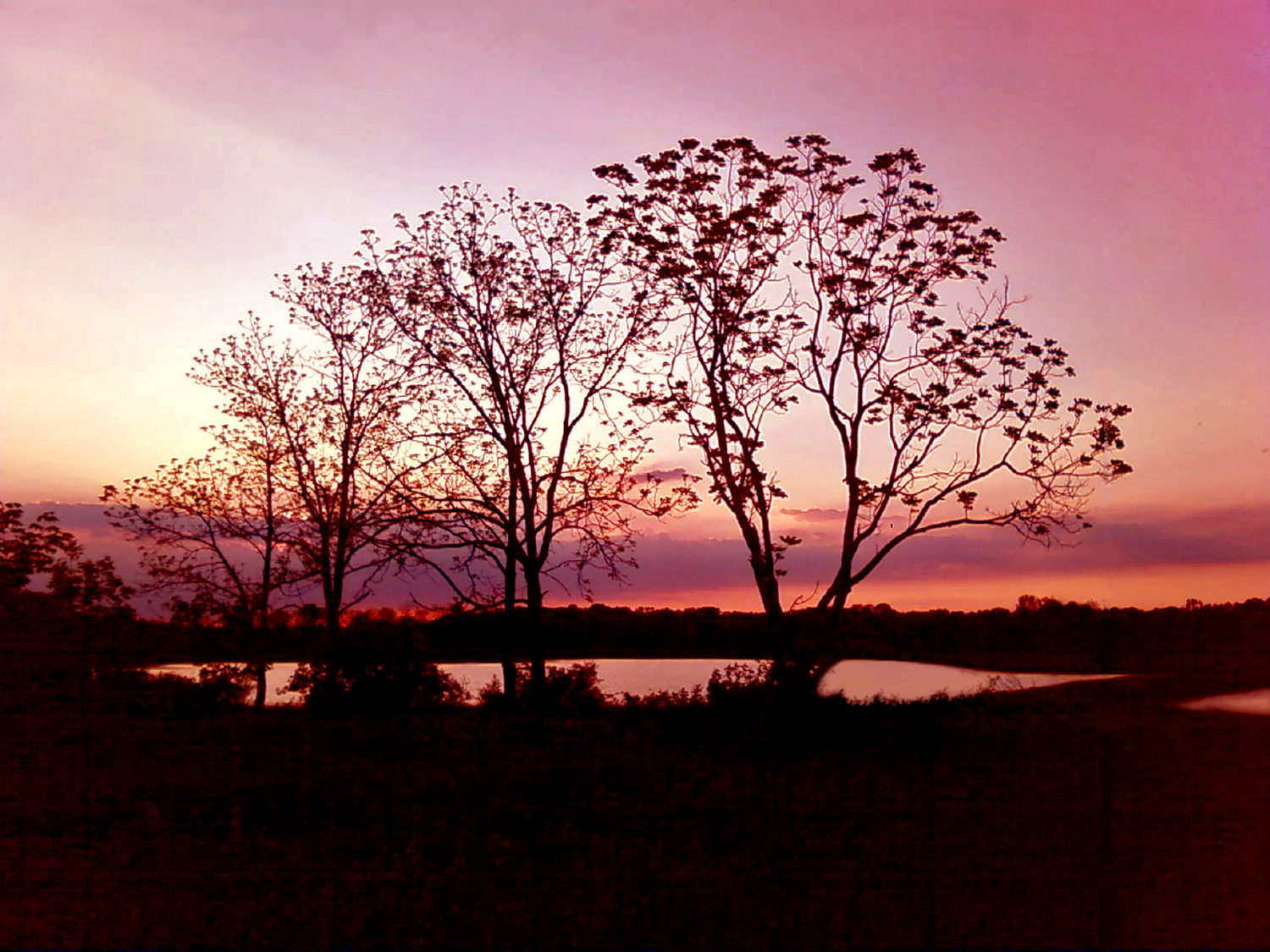 LethaHouse-Sunset at Lake and Wetlands.jpg