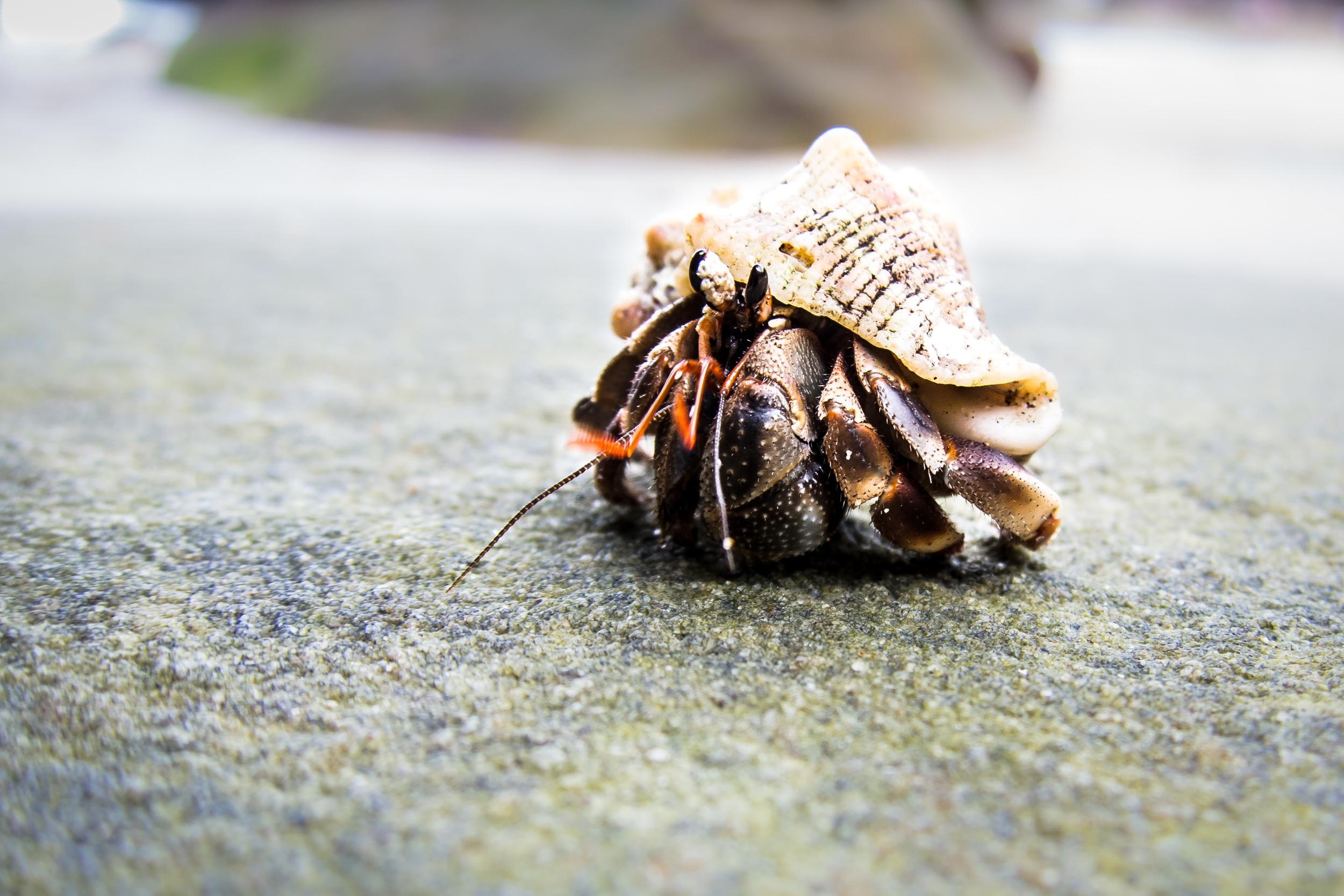 beach-crab.jpg