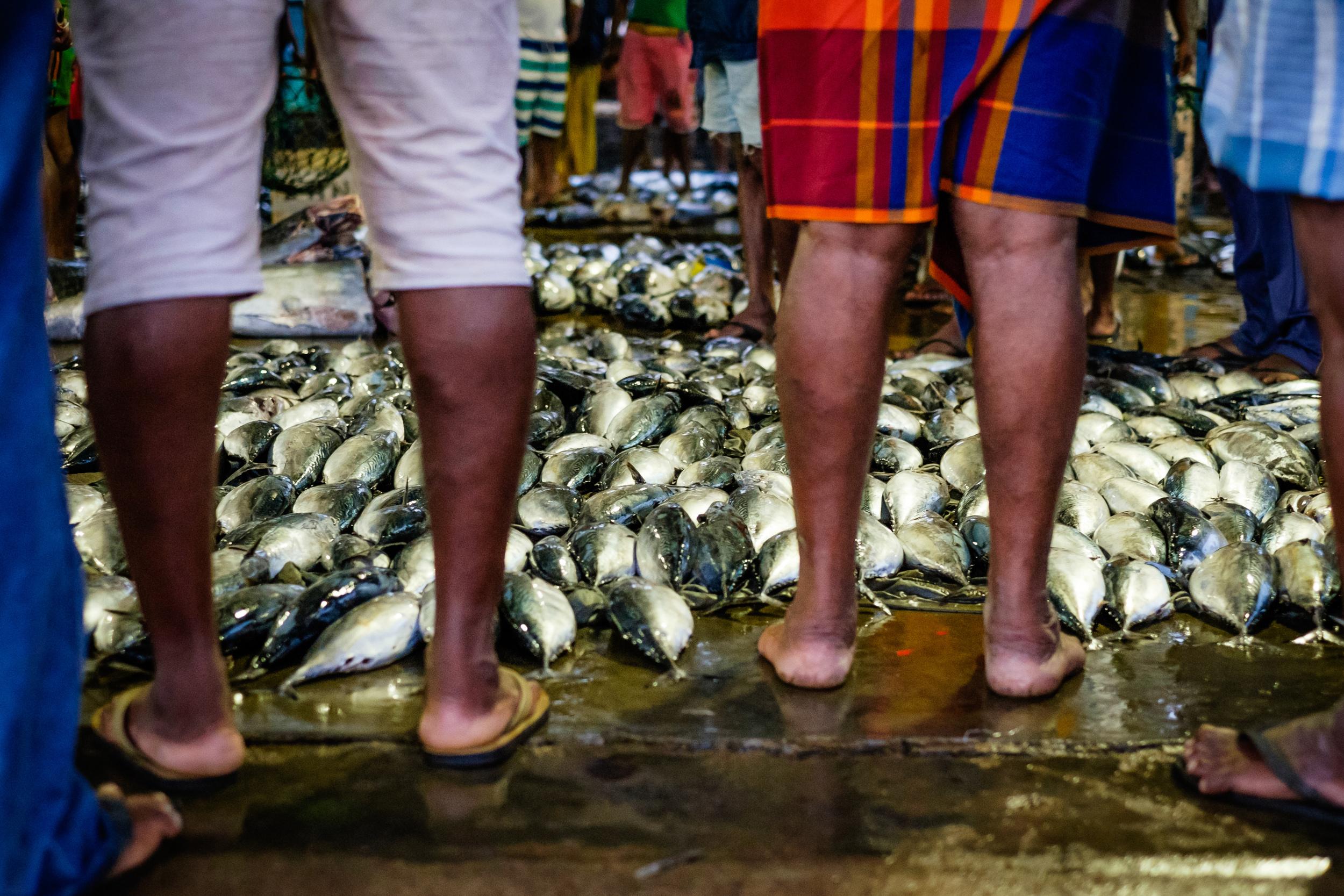 fish-market-1.jpg