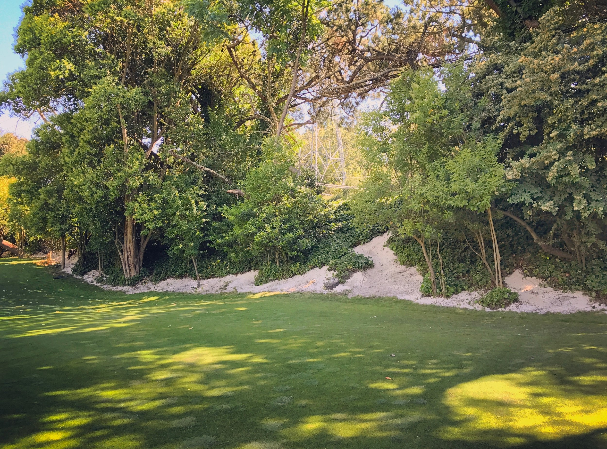 We had the opportunity this summer to go back and touch up this natural area on the 15th at Orinda, which used to be an ivy-covered fence and jungle.