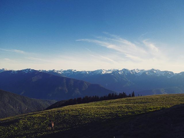 Stop into the shop on your next trip to hurricane ridge! 📸 @chasehalbert ⛰ 🦌 #hurricaneridge #olympicpark #olympicnationalpark #pnw #wildernest #outdoorstore #shoplocal #98110 #mountains #mountainviews #getoutside #dowhatyoulove