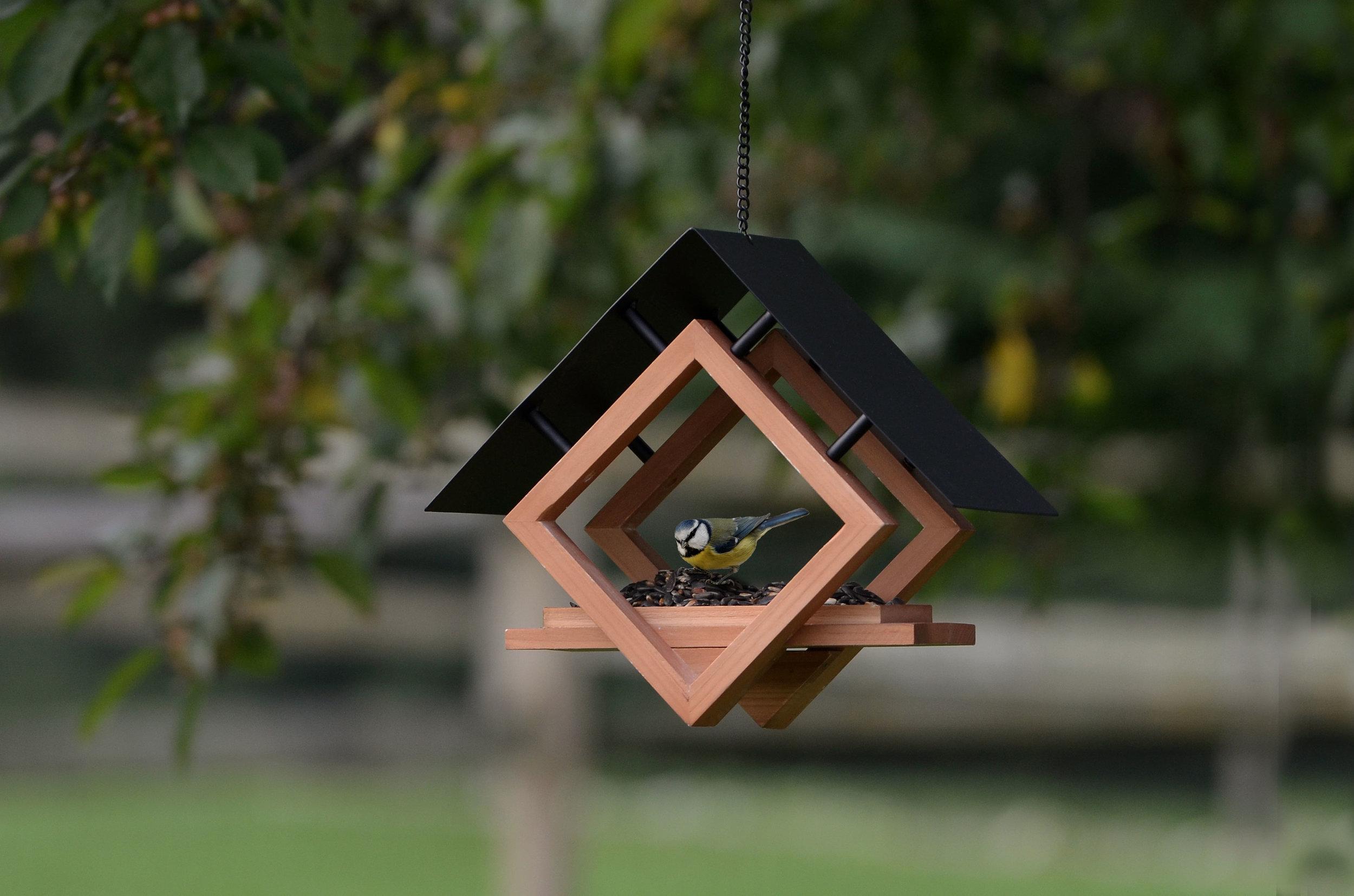 50180-EDIT-4_bird.jpg