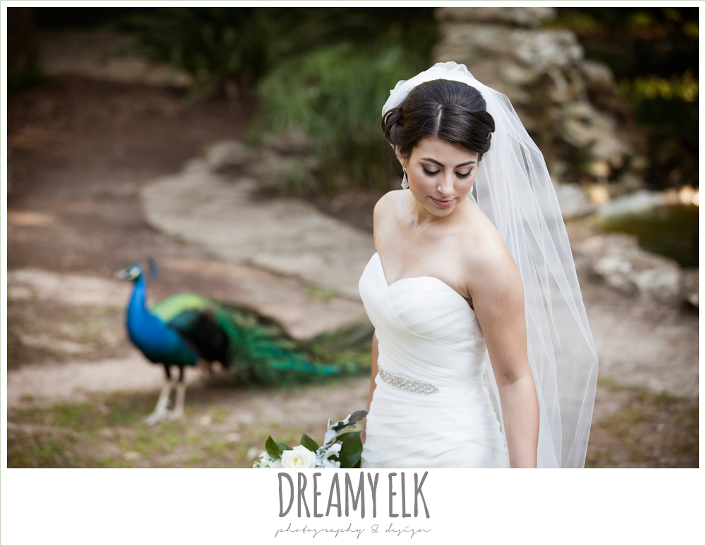 bridal photo with peacocks, strapless wedding dress, summer bridal photo, mayfield park, austin, texas {dreamy elk photography and design}
