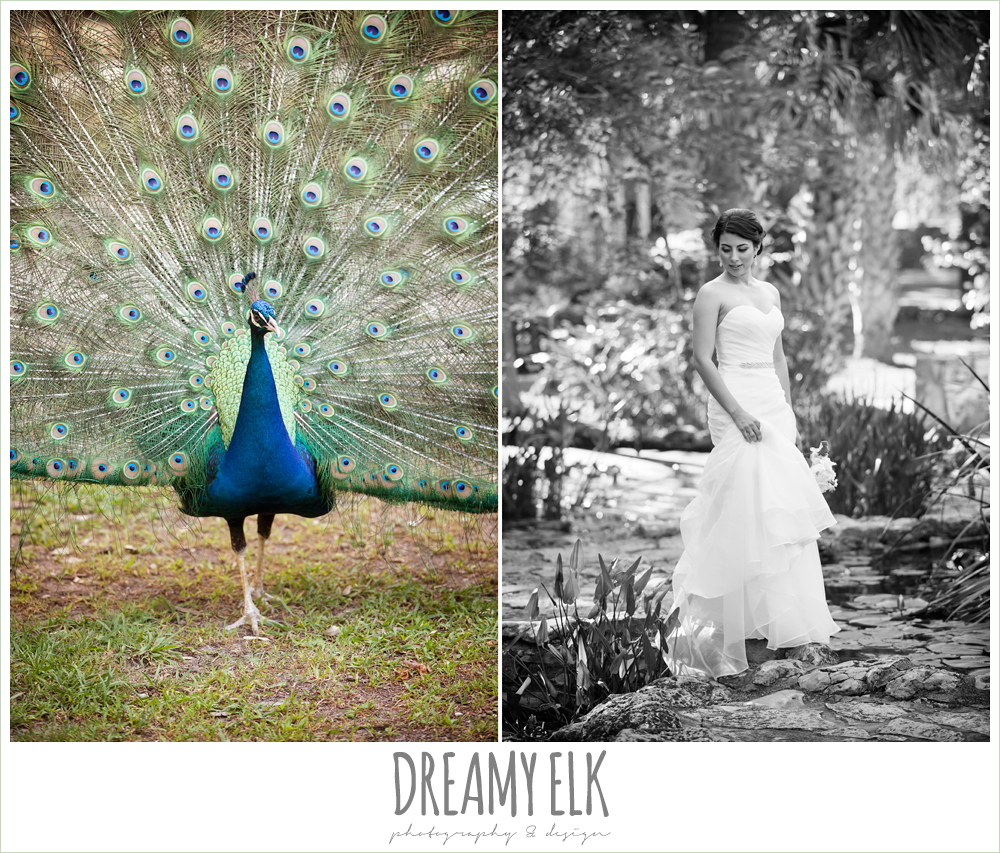 bridal photo with peacock, strapless wedding dress, summer bridal photo, mayfield park, austin, texas {dreamy elk photography and design}