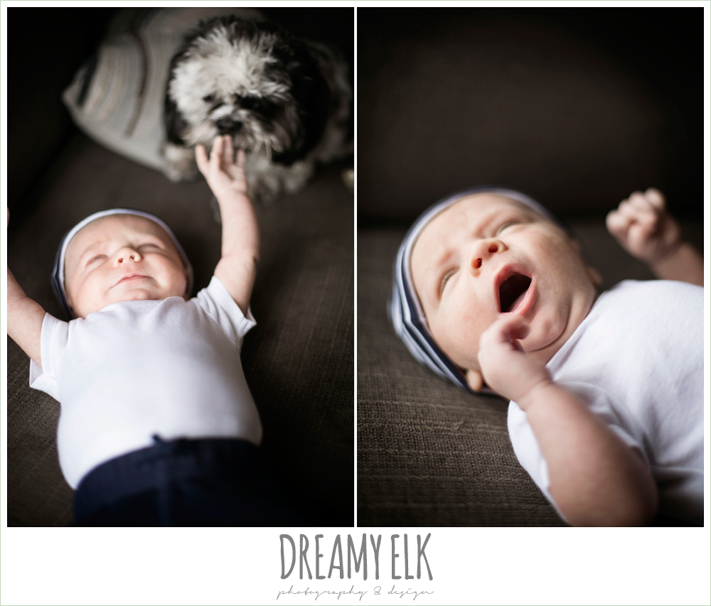 indoor one month baby boy photo with dog