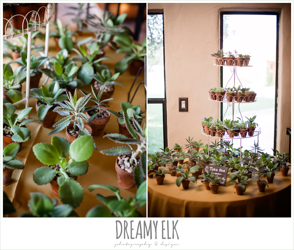 succulent thank you wedding favor, indoor wedding reception decor, table setting, maroon and gold fall wedding photo, la hacienda, dripping springs, texas {dreamy elk photography and design}