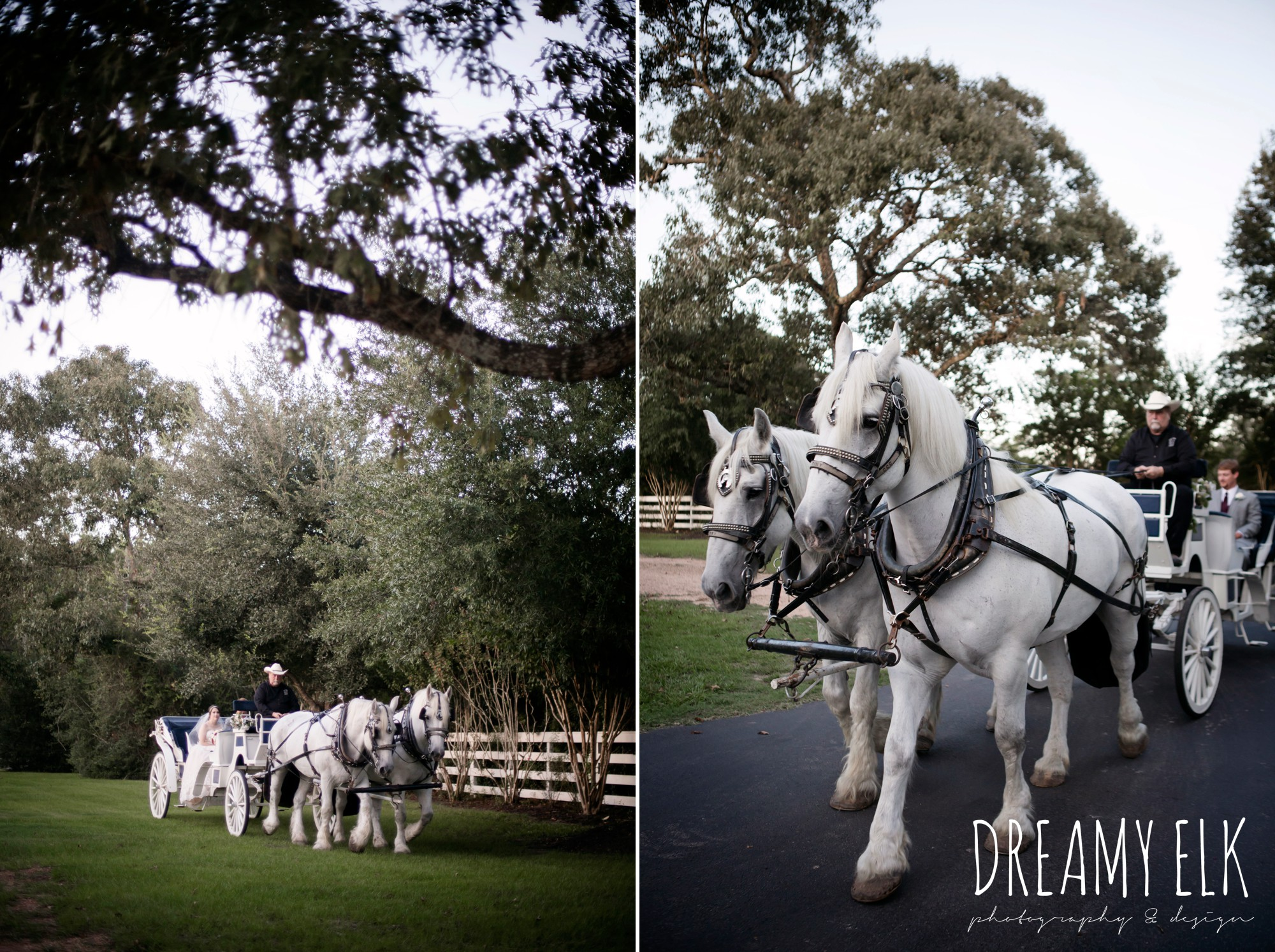 bride and groom in horse drawn carriage, classic carriage company, september wedding photo, ashelynn manor, magnolia, texas, austin texas wedding photographer {dreamy elk photography and design}