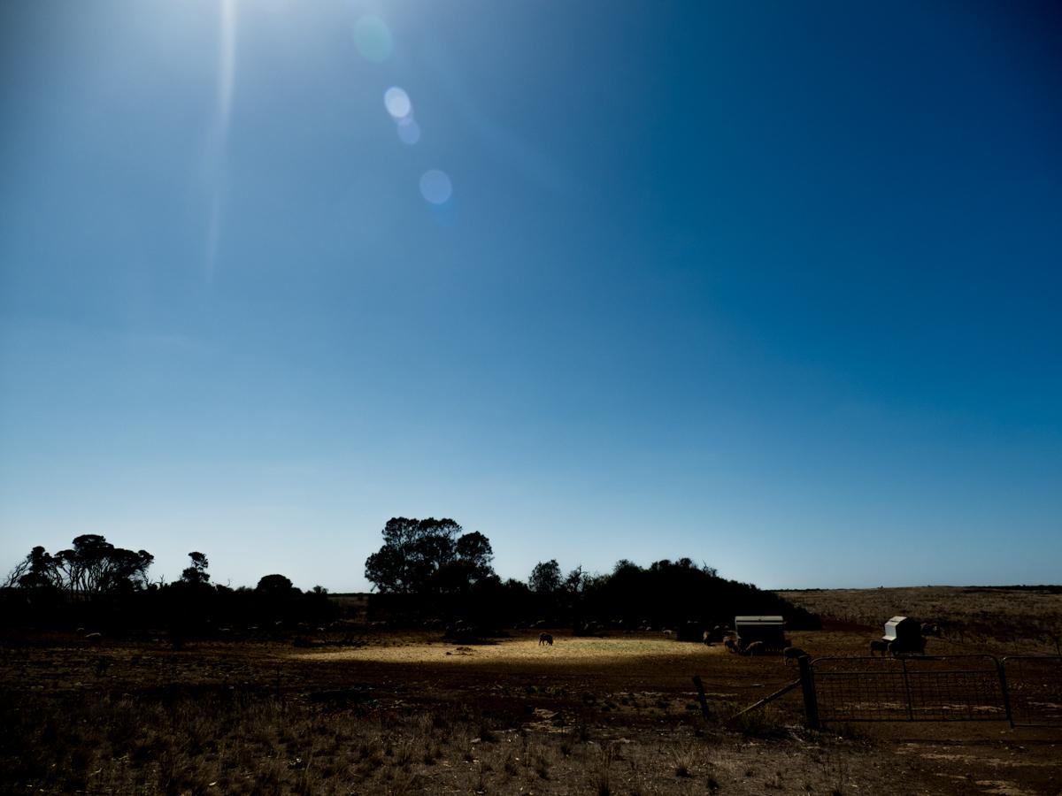 A farm in Elliston