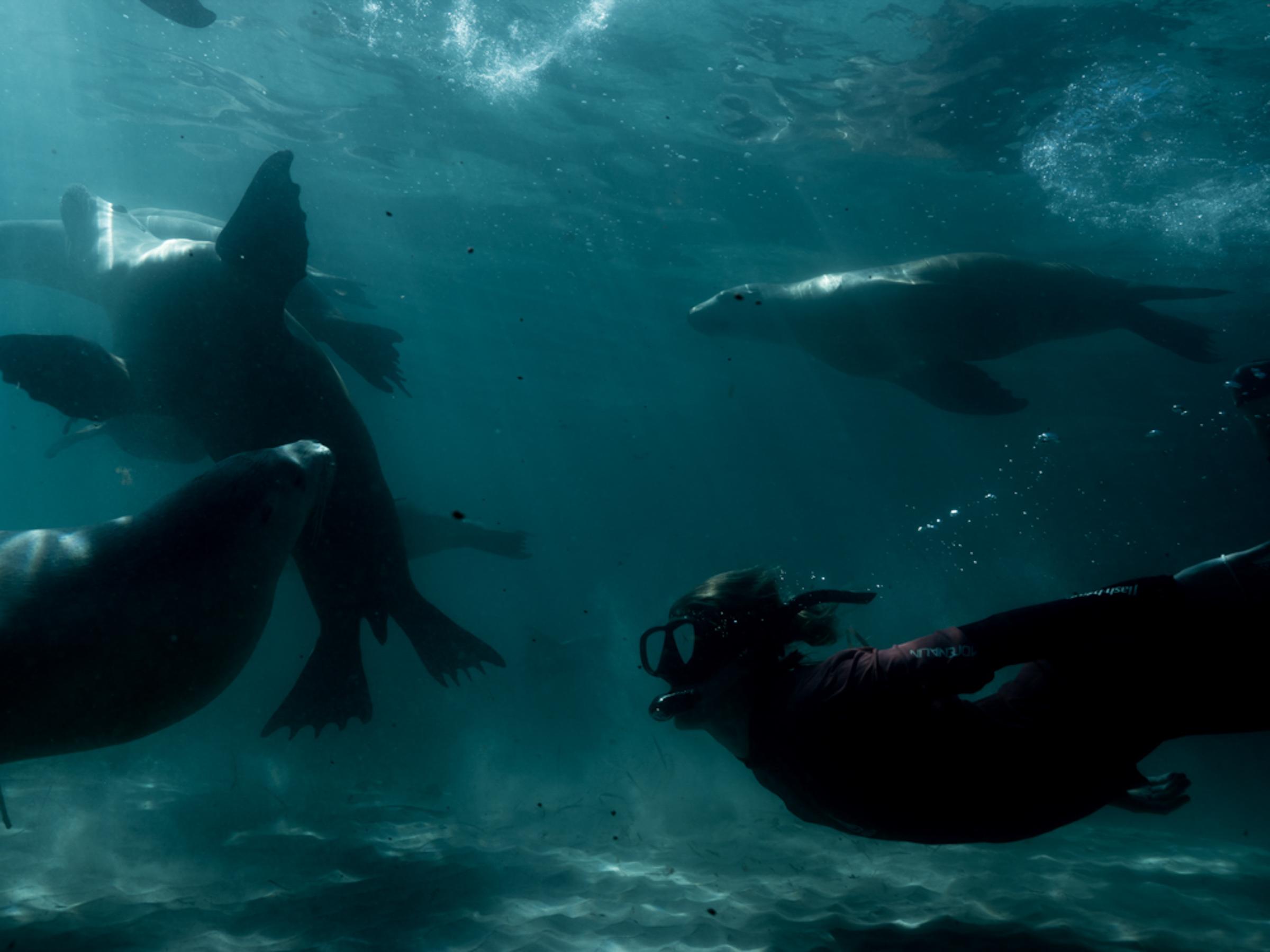 Adventure Bay charters sea lions
