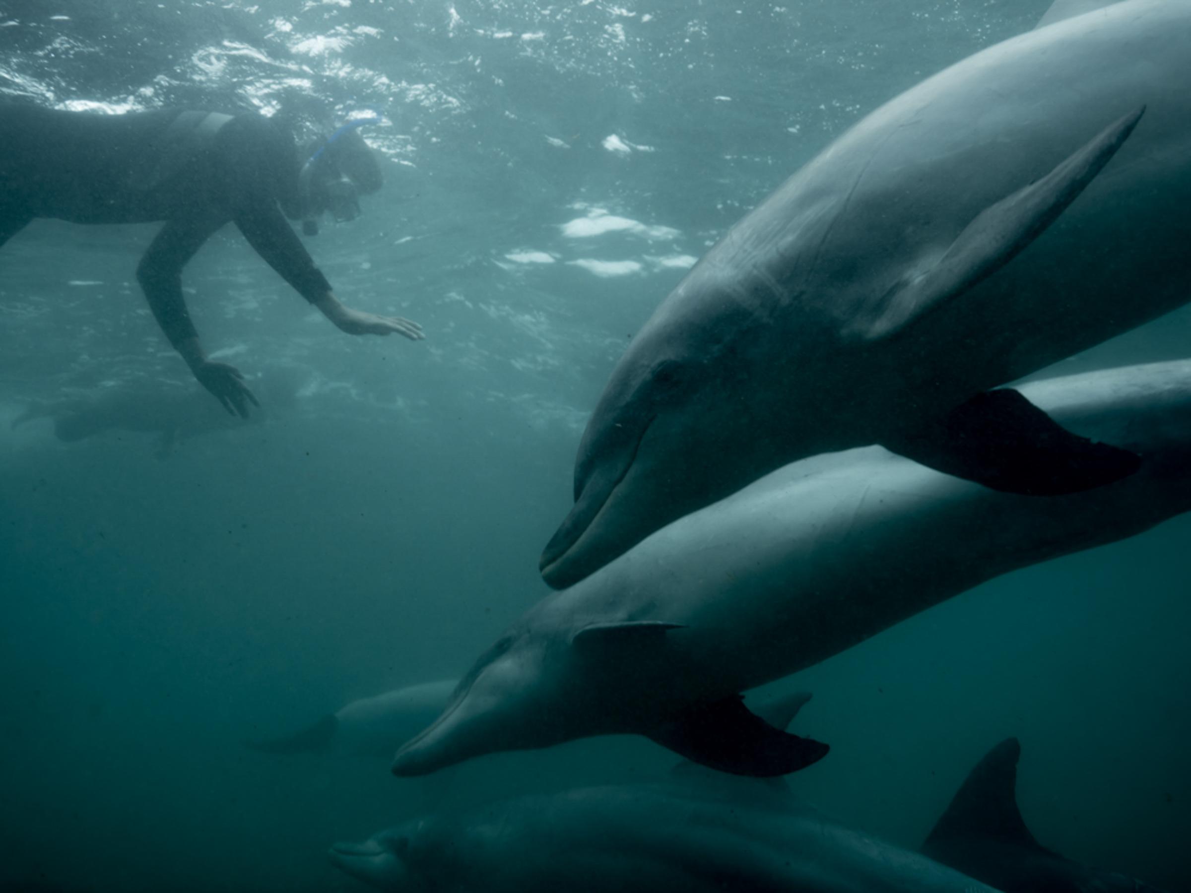 Baird Bay Ocean Eco experience - swimming with dolphins - Michaela Skovranova / Greenpeace