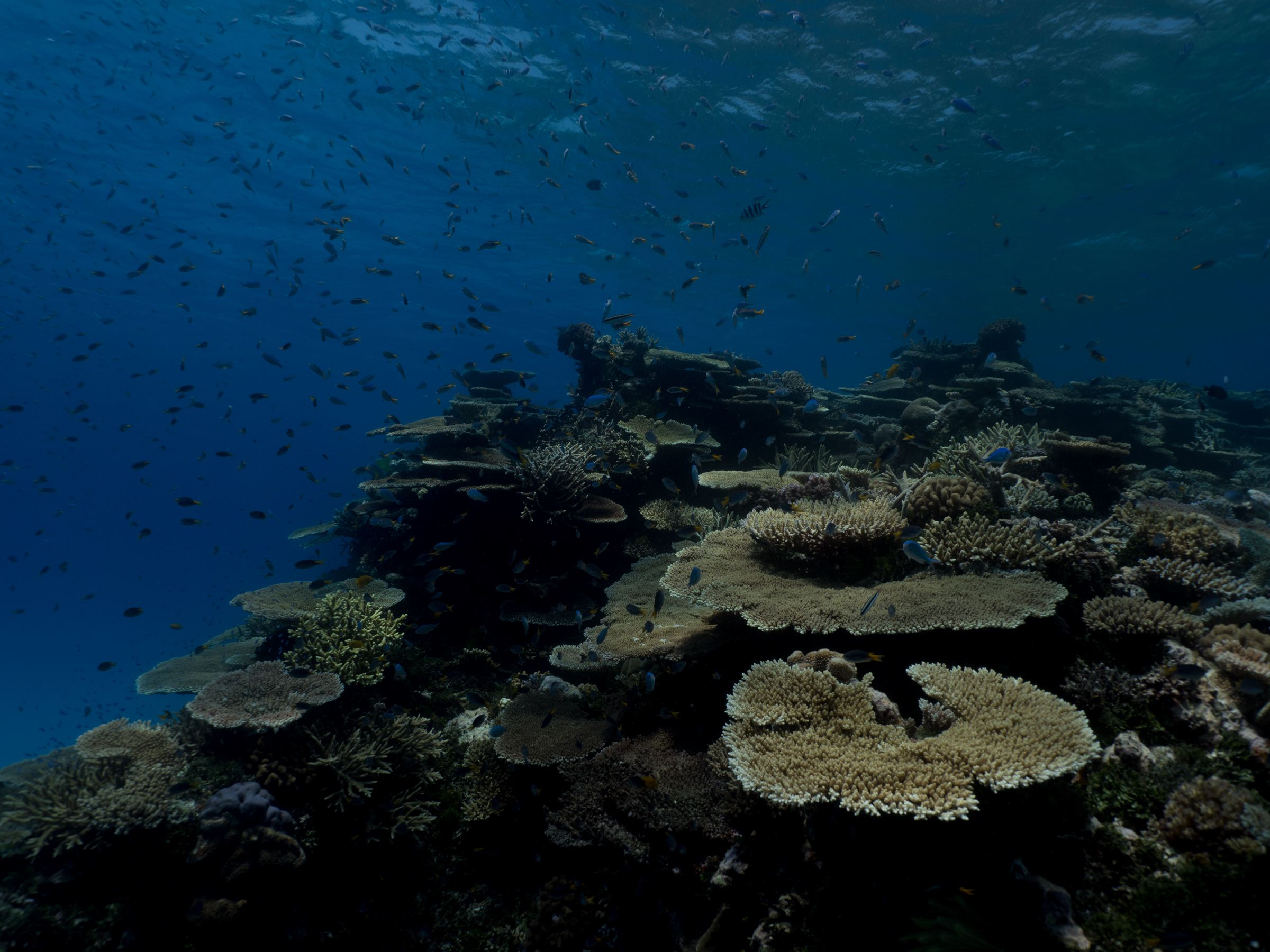 Underwater Snowstorm - The beginnings of life on the reef