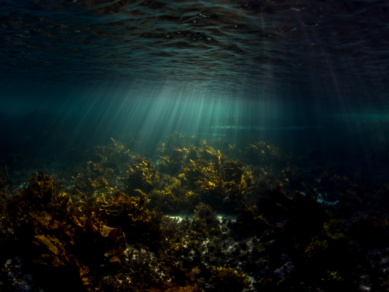 Ocean - Michaela Skovranova