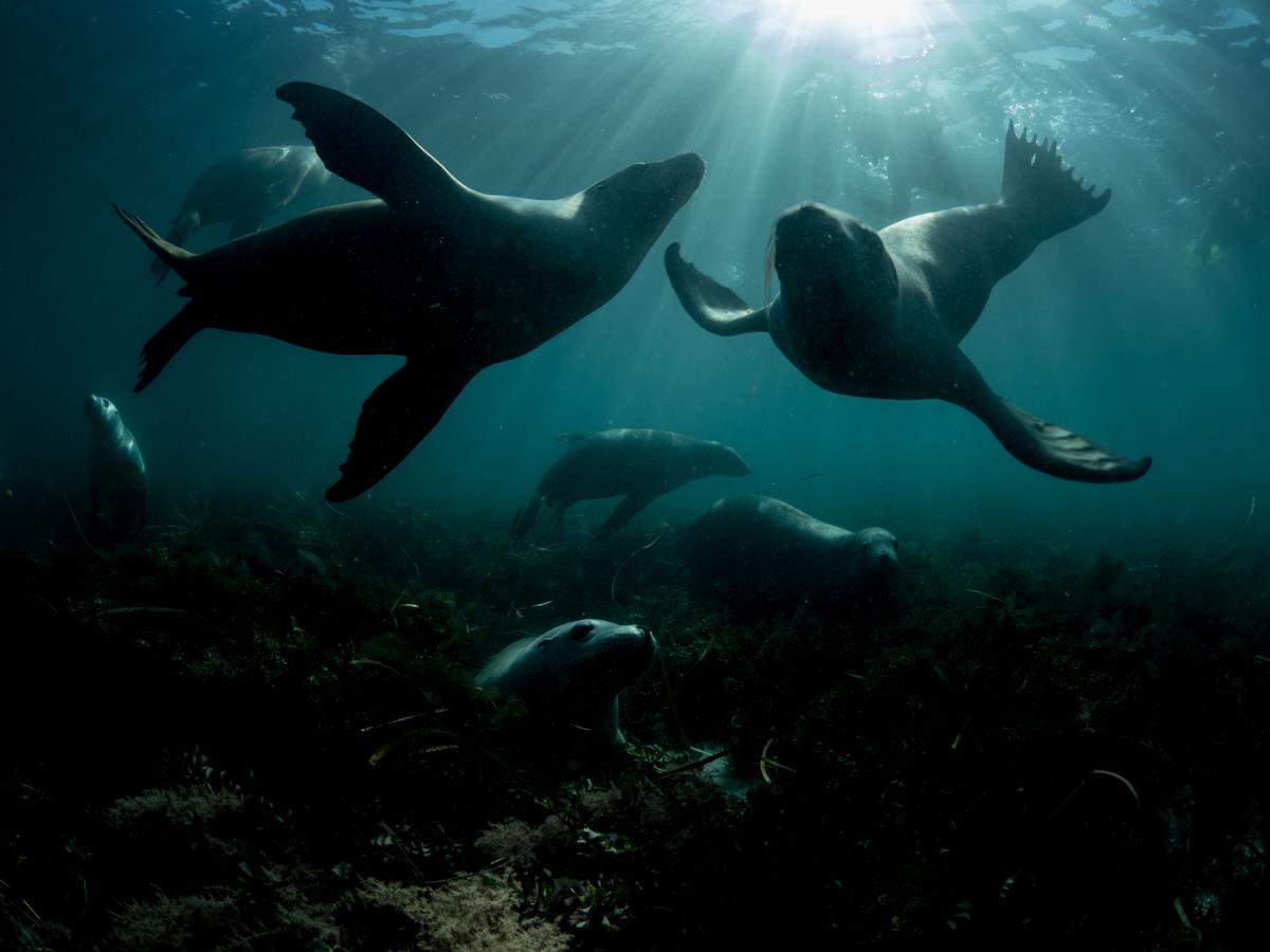 Greenpeace-Mishku-Sea-lions-3231804.jpg