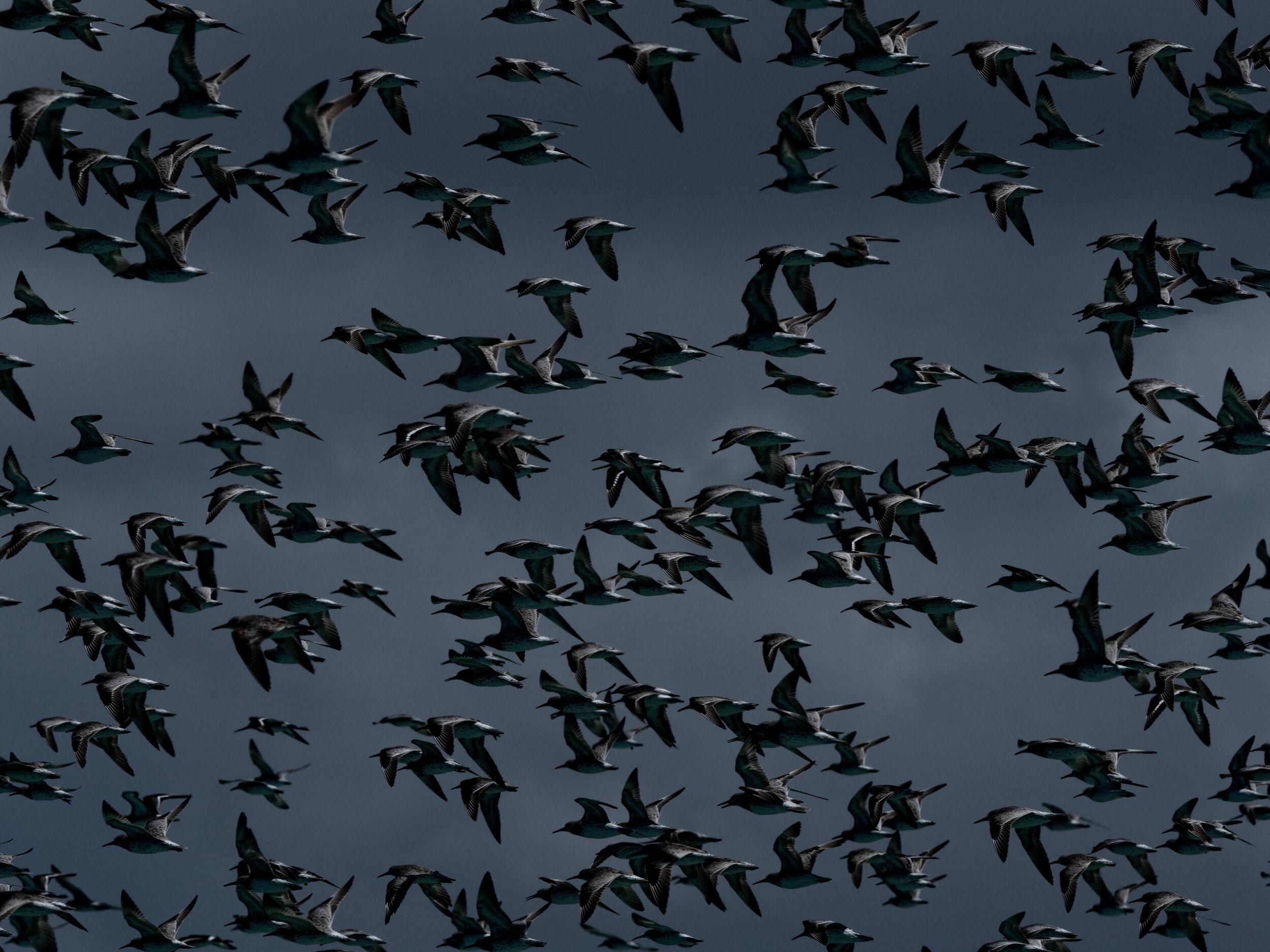Yawuru Country, Broome, Western Australia  Wildlife - Olympus Australia