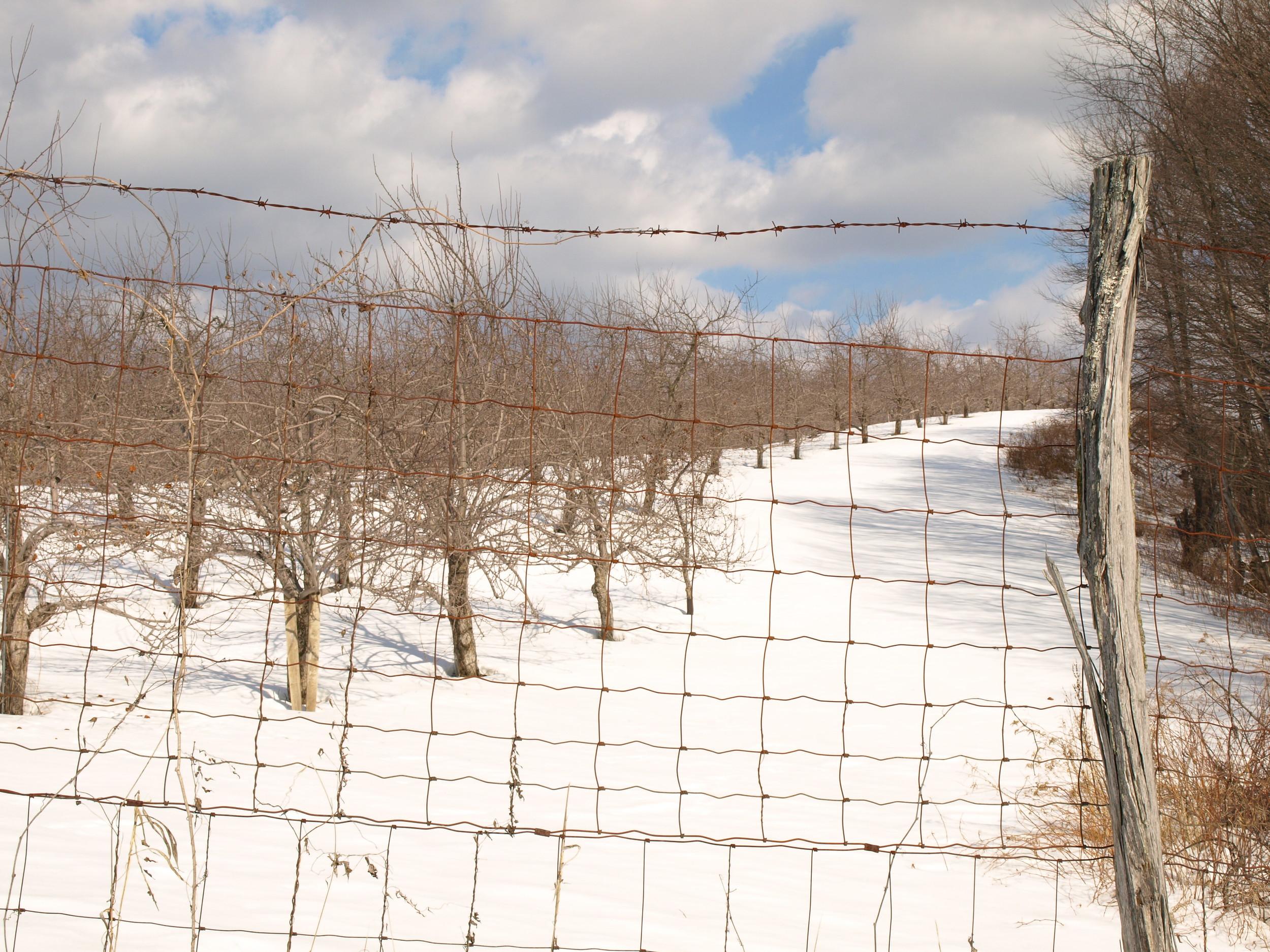 mountainorchard.jpg