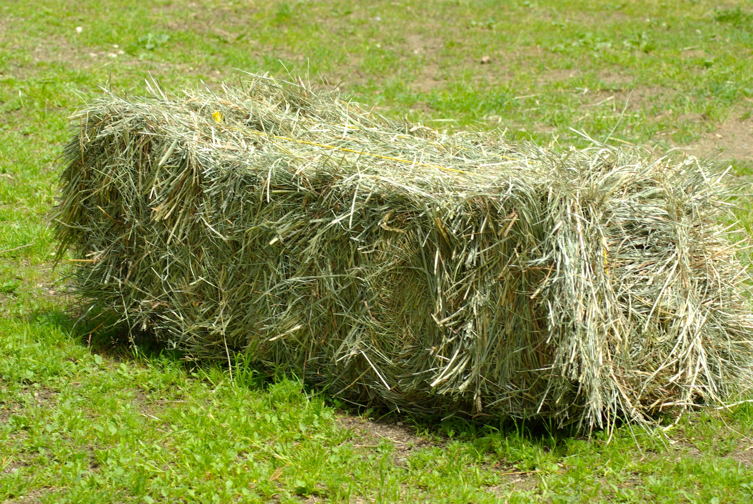 "This is a great example of the PERFECT texture 1/2"" and 1"" Handy Hay Net™ Slow Feeder Hay Bags."