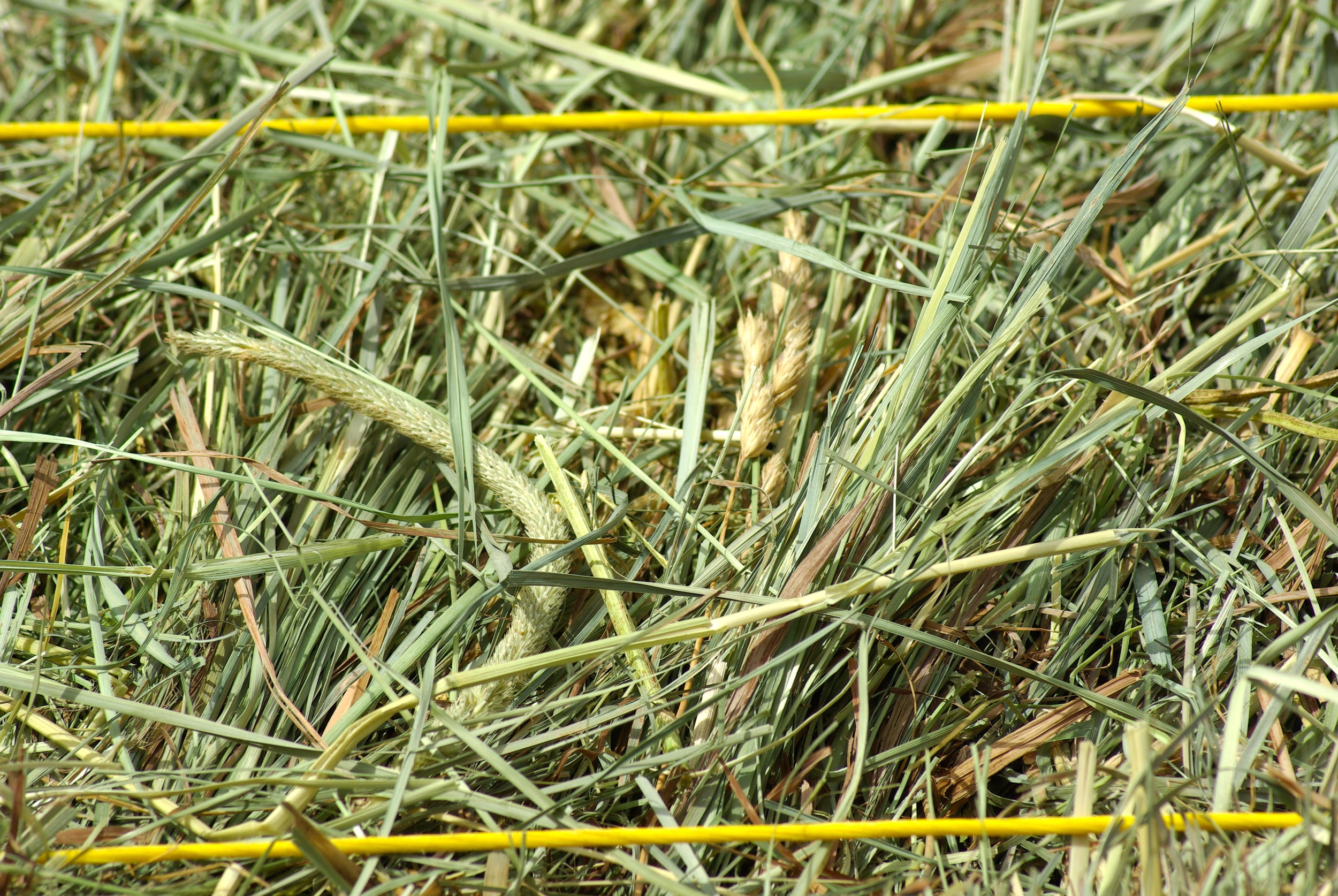 "Close up of perfect texture hay for 1/2"" or 1"" slow feeder hay nets.  This is the hay in the 1"" bale bag featured in the video."
