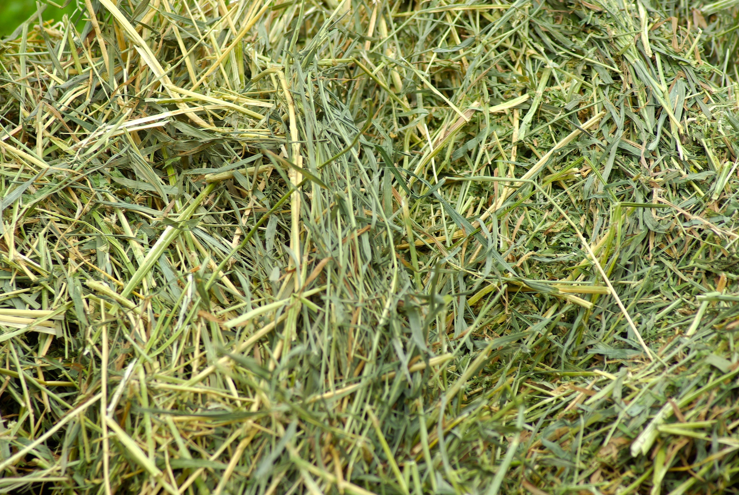 "Coarse hay with alfalfa, is also  extremely difficult  to get out of 1/2"" or 1"" hole hay bags."