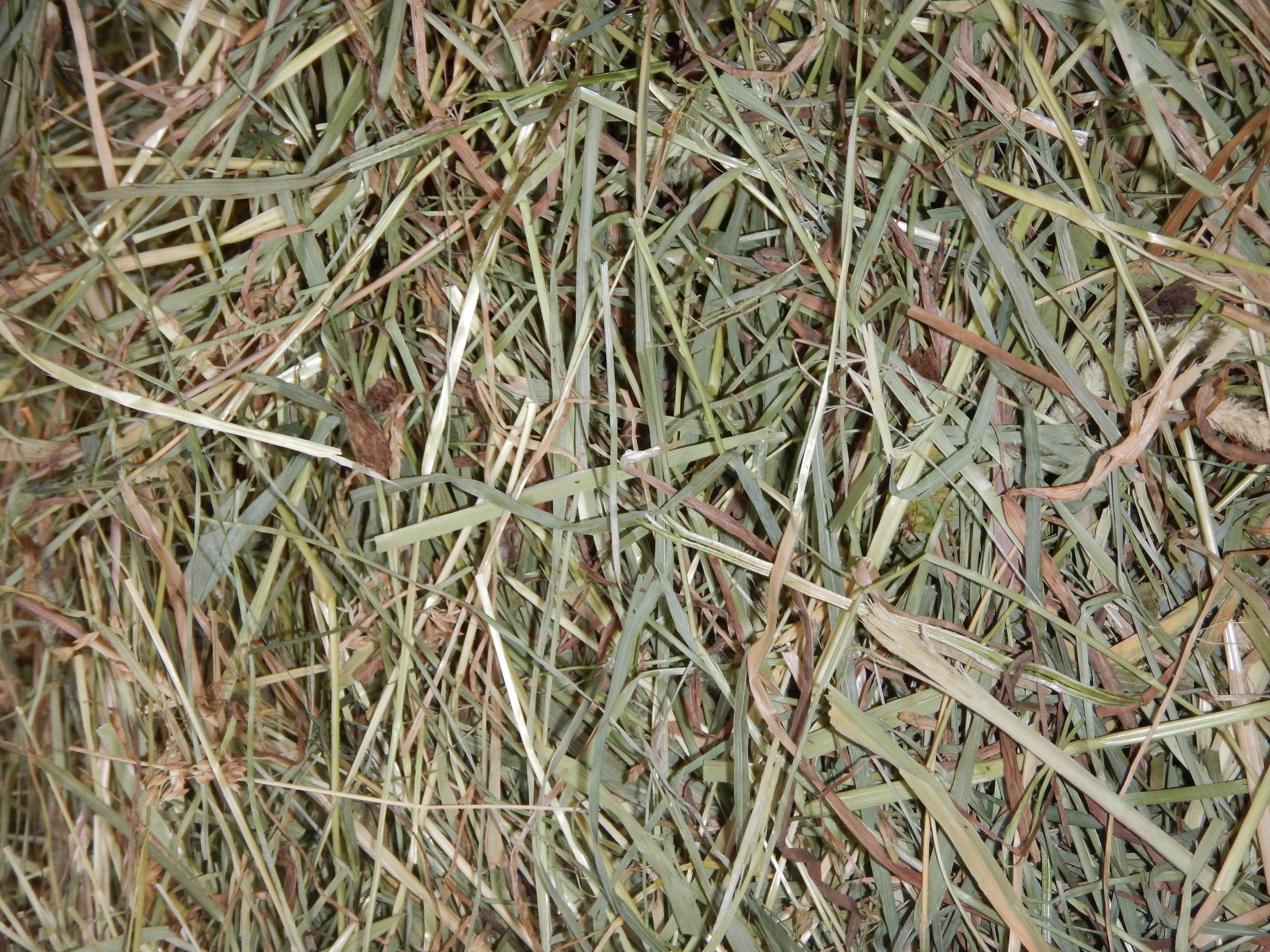Medium/coarse hay.