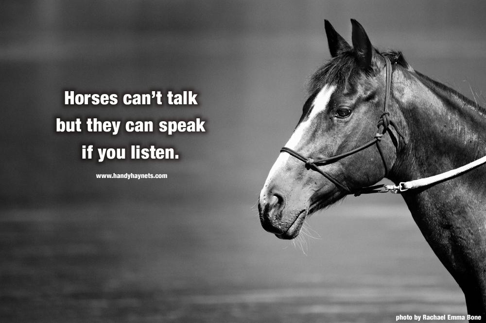 horses-cant-talk.jpg