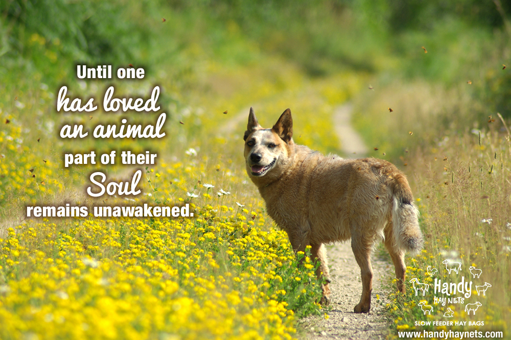 until-you-have-loved-an-animal.jpg